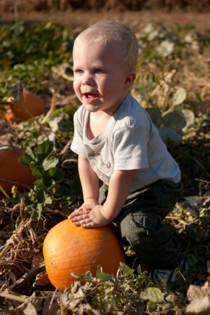 A one year old boy picks out a pumpkin