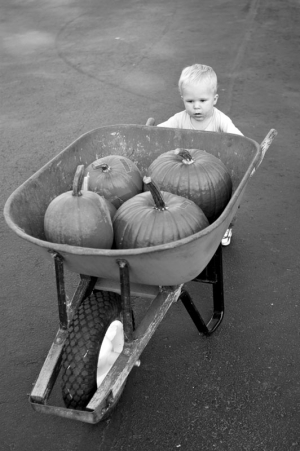 A one year old boy pushes a wheel barrow