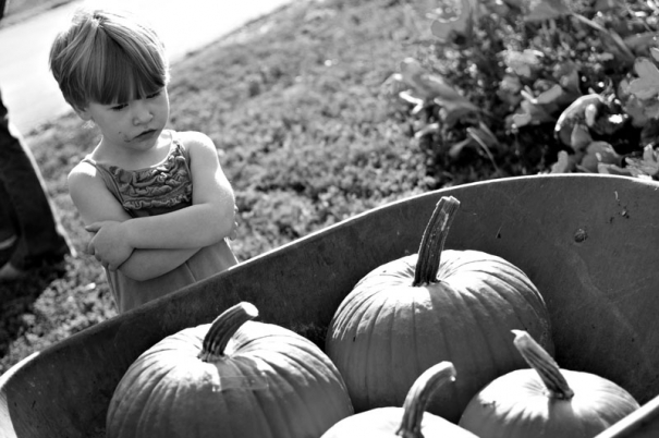 Girl inspects a wheel barrow full of pumpkins