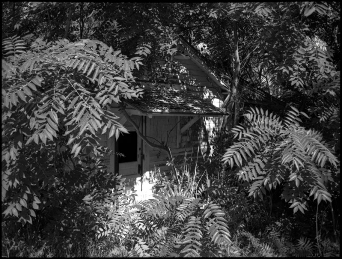 Small house completely overgrown by trees